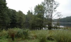Kosení přírodní rezervace Rybník Starý