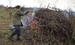 Příprava lesní výsadby