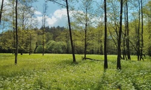 Kosení přírodní památky V Mezence