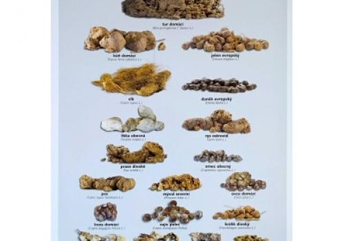 Plakát Lejna, bobky, koblížky
