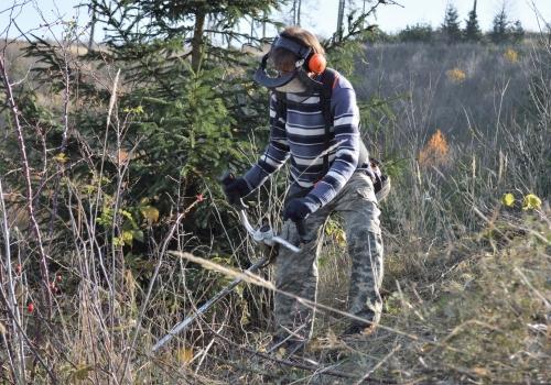 Vyžínání lesních výsadeb